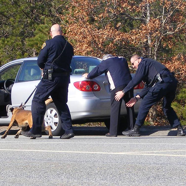 K-9 car search